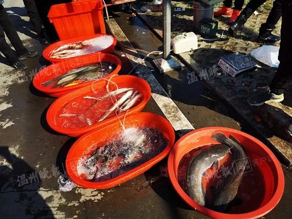 学院网站优化方案seo_不良商贩往水里加柴油 快死的鱼被逼得又活蹦乱跳