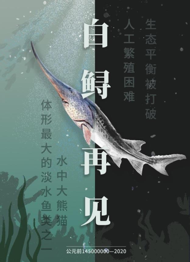 新闻seo优化_科学家:最后一次见到活体白鲟是2003年 但跟丢了