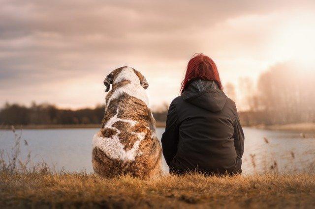 解析宠物用户的特点