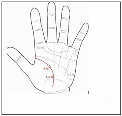 掌纹的拼音_掌纹的读音_掌纹的英文 - 词语掌纹