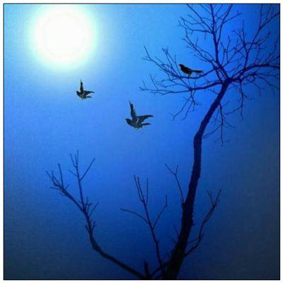 月夜的拼音_月夜的读音_月夜的英文 - 词语月夜