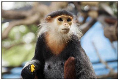 《叶猴》拼音/读音/英语/繁体字 词语大全