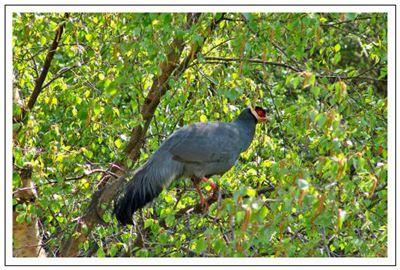 野禽的拼音_野禽的读音_野禽的英文 - 词语野禽