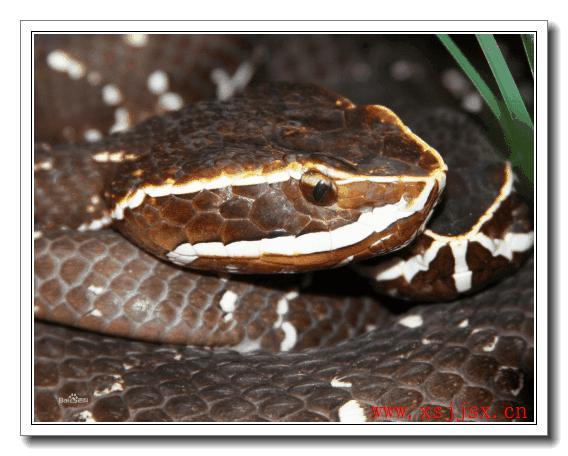 《土脚蛇》拼音字母/字读音/英语/繁体字 三字词语