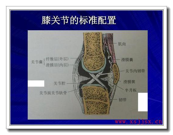 《膝关节》拼音/读音/英语/繁体字 三字词语