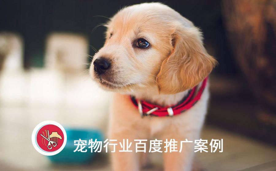 百度平均线索成本仅8元,宠物医院推广必须把握本地需求