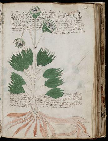 神秘天书伏尼契手稿被复印出售 约合人民币6万元