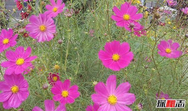世界十大最稀有漂亮的花,三千年开一次的花你知道吗?