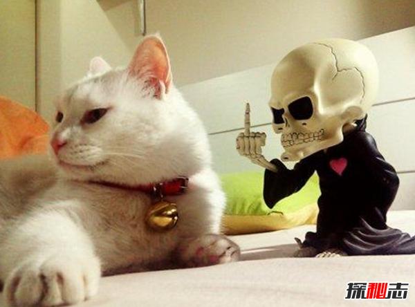 养猫后运气都变好了?猫喜欢靠近有灵气的人