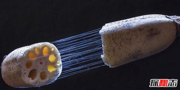 莲藕有丝是怎么回事?藕断丝连科学解释